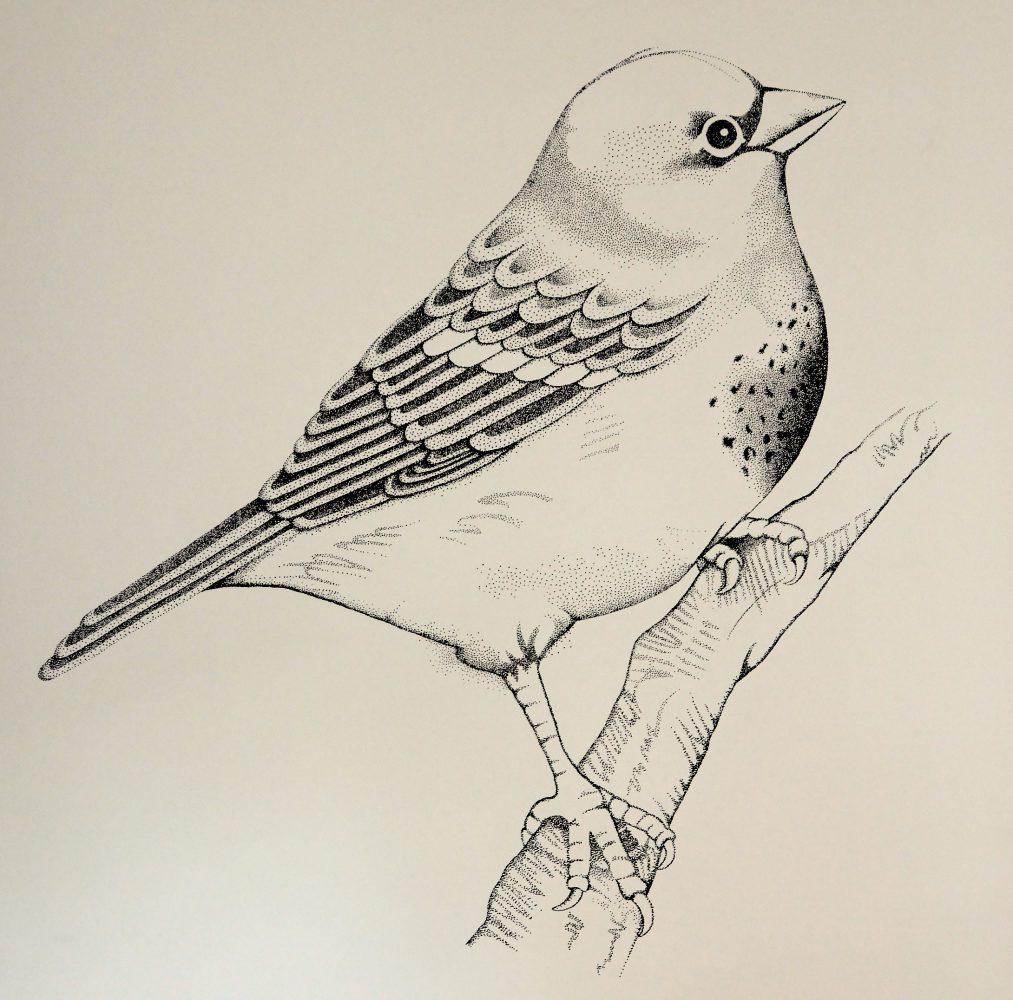 bird pointilism